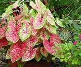 Gulf Coast Gardening: My Signature Garden Plant