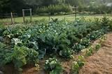 vegetable garden @ Blithewold