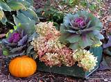 garden ideas centerpiece fall toolbox container gardening flowers