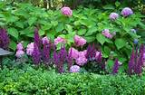 Combinations, Summer Borders, shade gardens, shade plants, hydrangea ...
