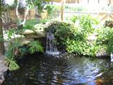 pond designs and important things to consider interior design