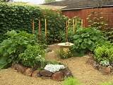 Backyard vegetable garden design - Interior and Home Decor