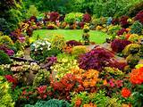 astuces pour concevoir un magnifique jardin color
