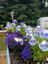 flower box | garden ideas | Pinterest