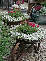 ... ideas for your plants Garden Ideas, Container Garden, Yard, Gardens