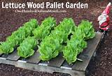 Wood Pallet Garden Pictures- Lettuce, Strawberries, Celery and Lettuce
