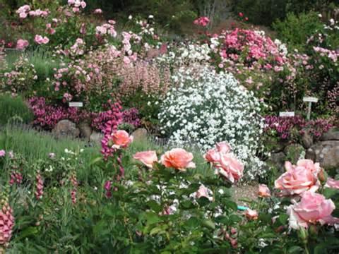 Rose Garden Design, Planning A Rose Garden