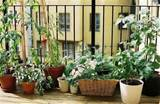 Balcony Garden Ideas On Pinterest Balcony Garden Small Balcony