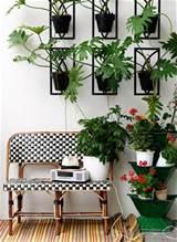 indoor garden idea