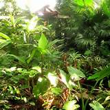 Balinese Garden Ideas Garden Ideas Picture