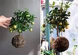 cheap garden pots and planters