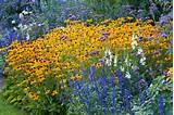 garden ideas border ideas perennial planting perennial combination