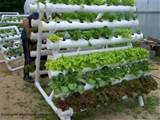 vegetable gardenhow to build small pvc pipe vertical vegetable garden