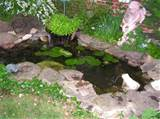 Small Water Garden Designs Best Design Ideas for Garden