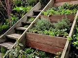 herb garden ideas growing green pinterest