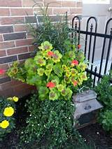 container plant garden ideas pinterest