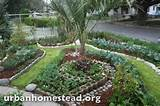 org how to transform your yard into a beautiful edible garden