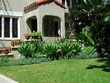 the second front yard uses this row of agaves underplanted with