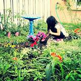 Butterfly garden | Garden Ideas | Pinterest