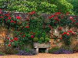 gardening garden design landscaping vine covered wall brick