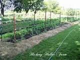 No Till Gardening And Heavy Mulch | Kitchen Gardens | Pinterest