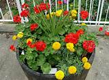 Container Gardening Full Sun Annuals - Home Design - Home Design