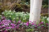 Garden ideas, Border ideas, Plant Combinations, Bulb Combinations ...