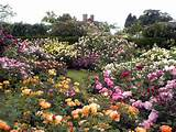 who could possibly have enough roses in a garden to make the landscape ...