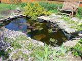 backyard water garden jpg