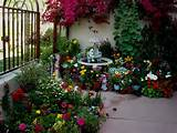 ... rambling, riotous splashes of colour in this potted courtyard garden