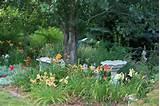 butterfly garden layout