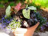 ... > Container Gardening > Container Garden Ideas Full Sun Ideas