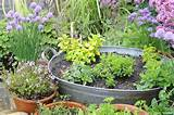 Best Herbs For Container Gardening | Organic & Gardening Ideas | Pi ...