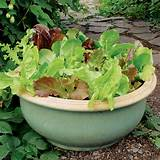 ... shaped pot. Herbs and salads grow brilliantly in containers and pots