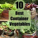 10 best container vegetables for beginning gardeners diy home things