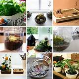 DIY indoor gardens | Craft Ideas | Pinterest