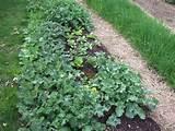 Spring-Garden-Greens