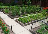 Raised Bed Vegetable Gardening : Vegetables to Plant