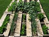 Using ordinary pallets in a fantastic garden | Flea Market Gardening