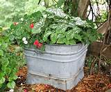 container-gardening-ideas-container-gardening-gardening-repurposing ...