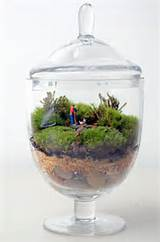 Live Moss terrarium // Little People // from PinkSerissa on Etsy