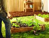organic gardening tips the home depot community