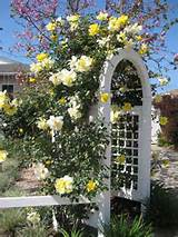 roses flowers garden designs decorating ideas 9 jpg