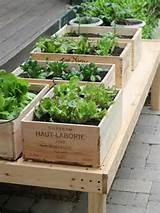 vegetable garden ideas raised beds wooden crates plant containers