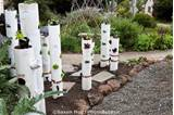 Vertical gardening, pvc pipe with vegetables in California front yard ...