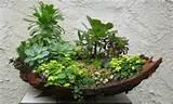 jardin miniature en plantes succulentes naines dans une croûte d ...