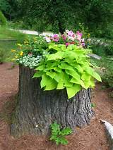 Tree Stump Decorating Ideas | … stump — tree struck by lightening ...