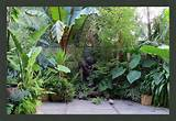 Tropical Garden Plants Photograph 24407 | tropical garden in