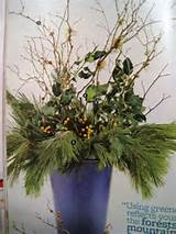 Another winter greenery pot | Garden Ideas | Pinterest