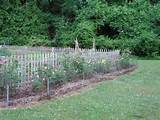 vegetable garden fencing vegetable garden fence ideas youtube